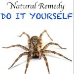 GETTING RID OF SPIDERS NATURALLY