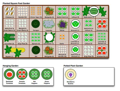 How many plants to grow per square.
