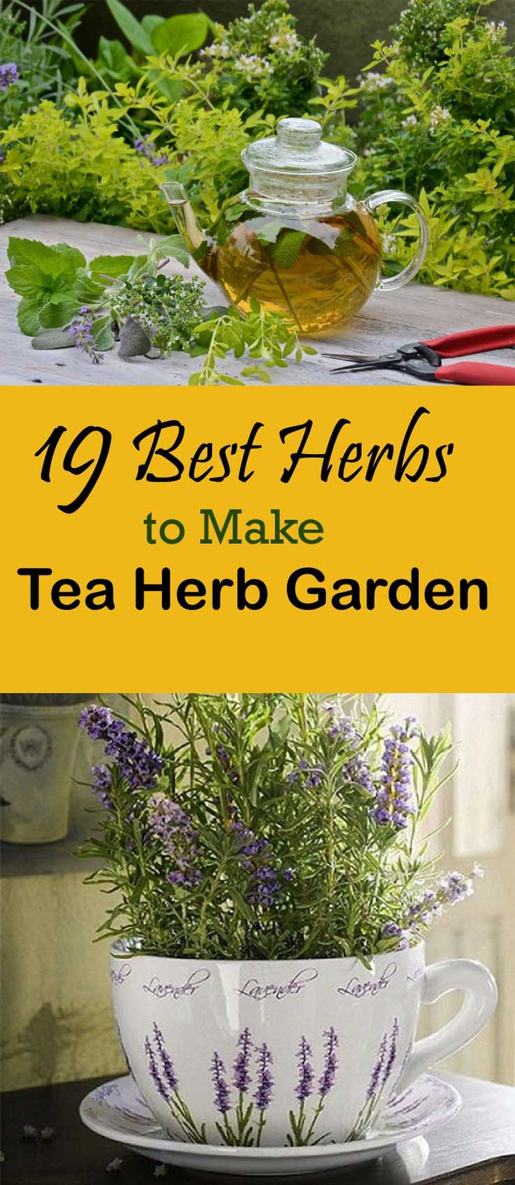 Like to sip herbal tea? Check out 19 Best Herbs To Make Tea Herb Garden