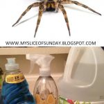 Kill Spiders With Natural Remedies: Effortless and Easy DIY