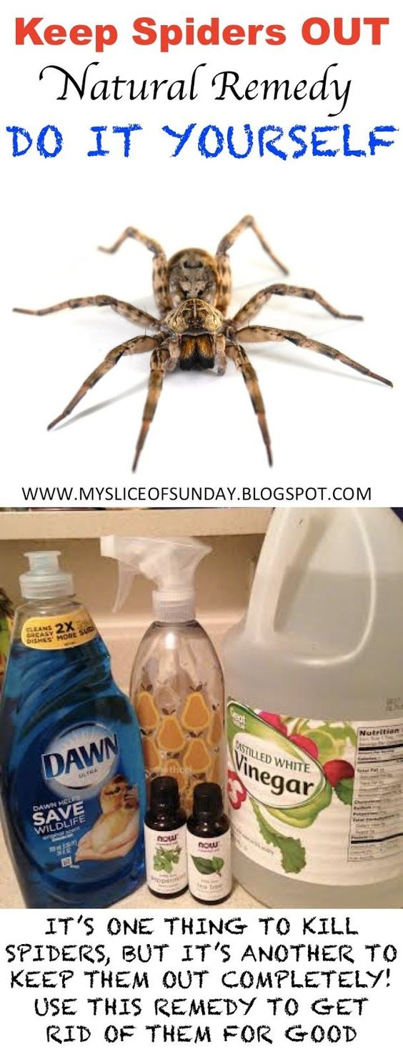 kill spiders with natural remedies effortless and easy