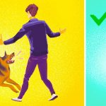 What Should You Do In A Sudden Dog Attack