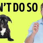 Behaviours that Dogs Hate When You Do but you Cannot Understand