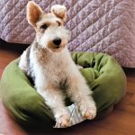 Make A Dog Bed From Your Old Sweaters